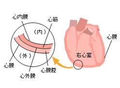 胸 痛む 左 が 急に胸が痛くなり続いています。心臓や肺の病気でしょうか?|一般社団法人日本呼吸器学会